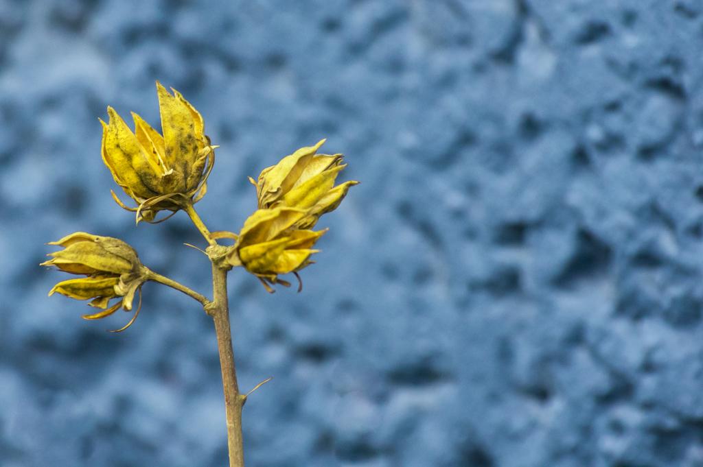 Bleu et jaune...