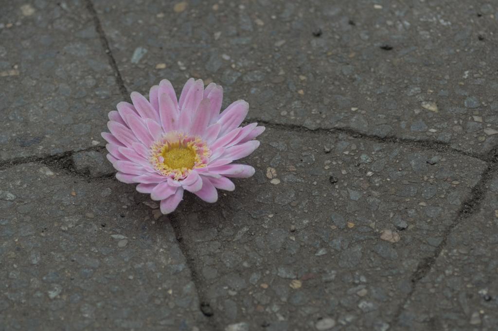 Fleur de ma ville....