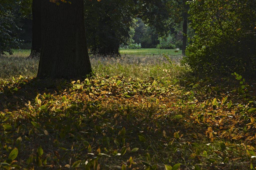 C'est l'automne...